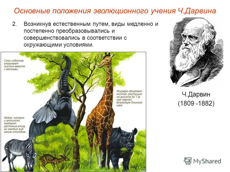 Основные положения эволюционного учения Ч.Дарвина Ч.Дарвин (1809 -1882) 2.Возникнув естественным путем, виды медленно и постепенно преобразовывались и совершенствовались в соответствии с окружающими условиями.