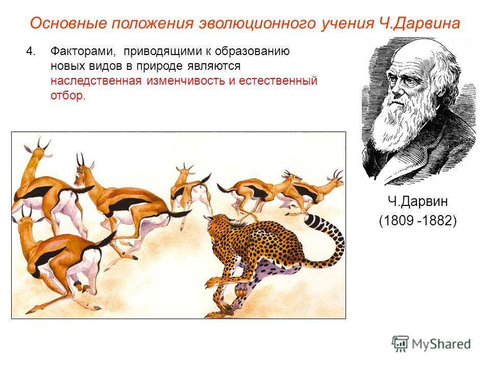 Основные положения эволюционного учения Ч.Дарвина Ч.Дарвин (1809 -1882) 4.Факторами, приводящими к образованию новых видов в природе являются наследственная изменчивость и естественный отбор.