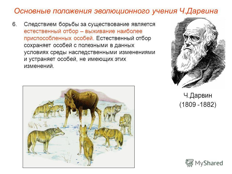 Основные положения эволюционного учения Ч.Дарвина Ч.Дарвин (1809 -1882) 6.Следствием борьбы за существование является естественный отбор – выживание наиболее приспособленных особей. Естественный отбор сохраняет особей с полезными в данных условиях ср