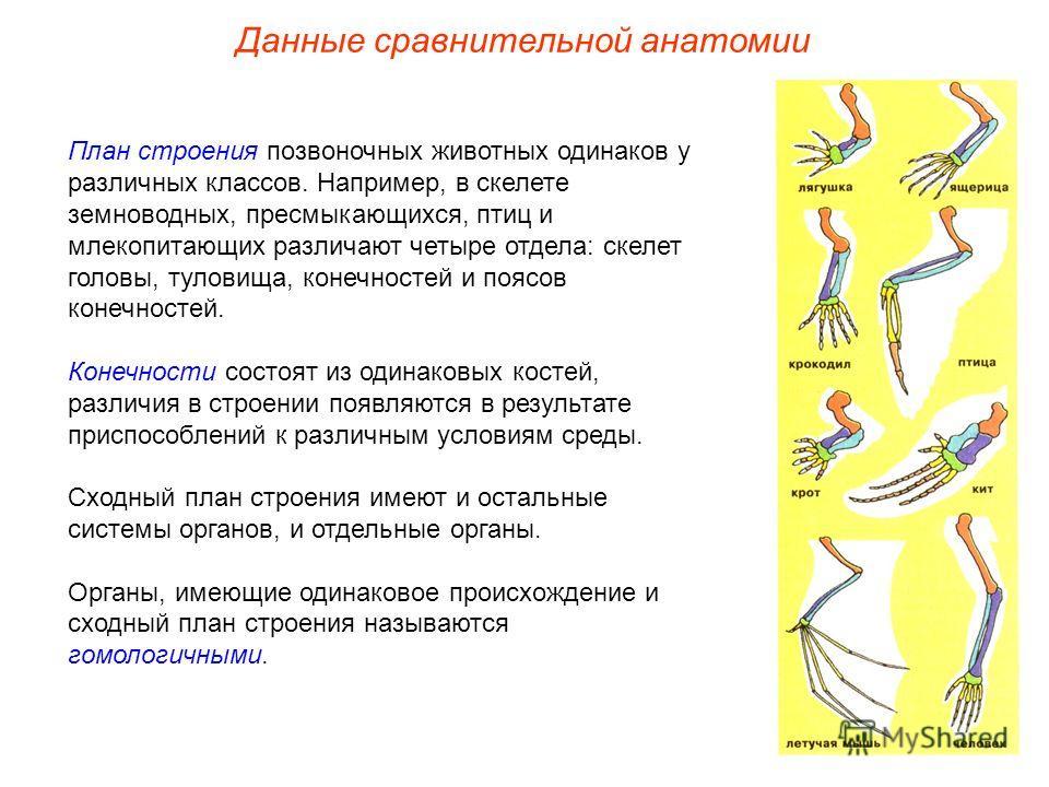 План строения позвоночных животных одинаков у различных классов. Например, в скелете земноводных, пресмыкающихся, птиц и млекопитающих различают четыре отдела: скелет головы, туловища, конечностей и поясов конечностей. Конечности состоят из одинаковы