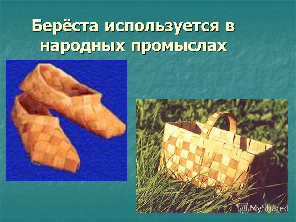 Берёста используется в народных промыслах