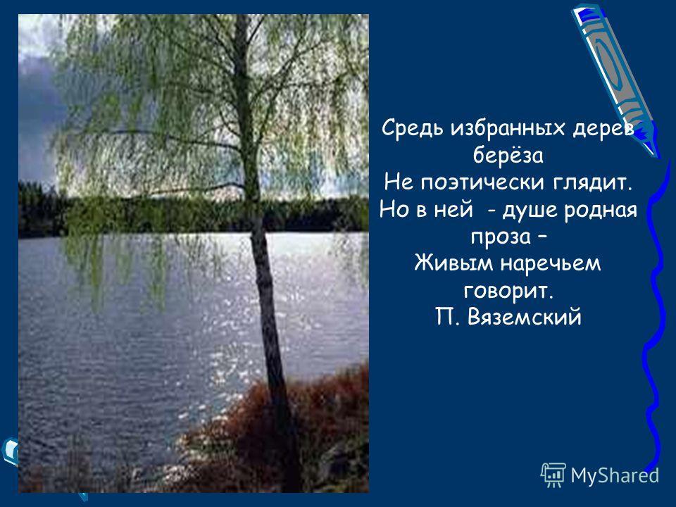Средь избранных дерев берёза Не поэтически глядит. Но в ней - душе родная проза – Живым наречьем говорит. П. Вяземский