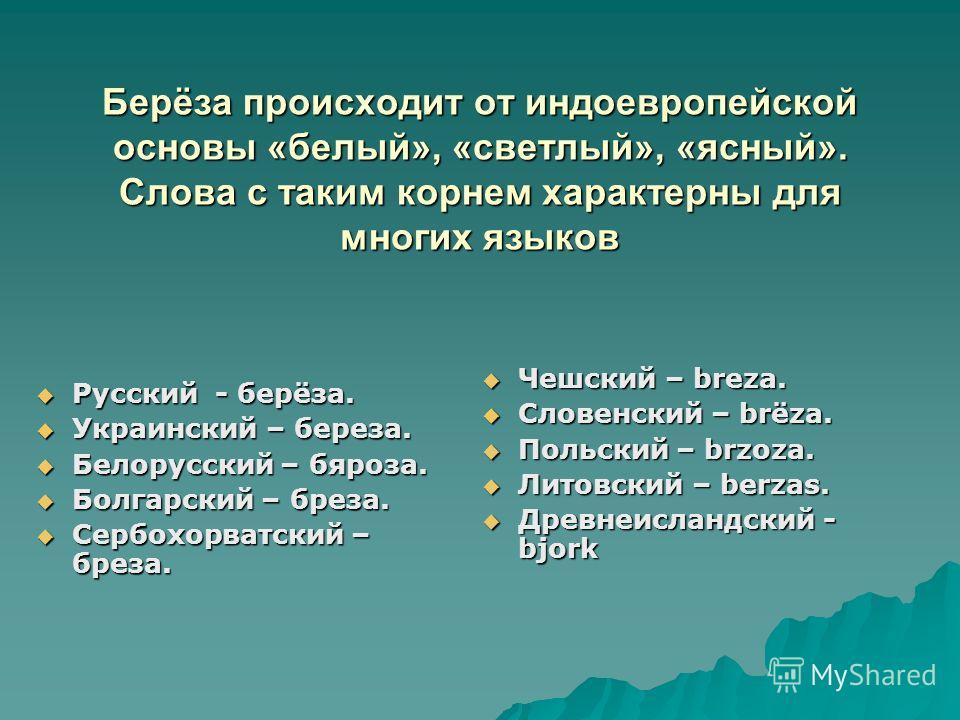 Берёза происходит от индоевропейской основы «белый», «светлый», «ясный». Слова с таким корнем характерны для многих языков Русский - берёза. Русский - берёза. Украинский – береза. Украинский – береза. Белорусский – бяроза. Белорусский – бяроза. Болга