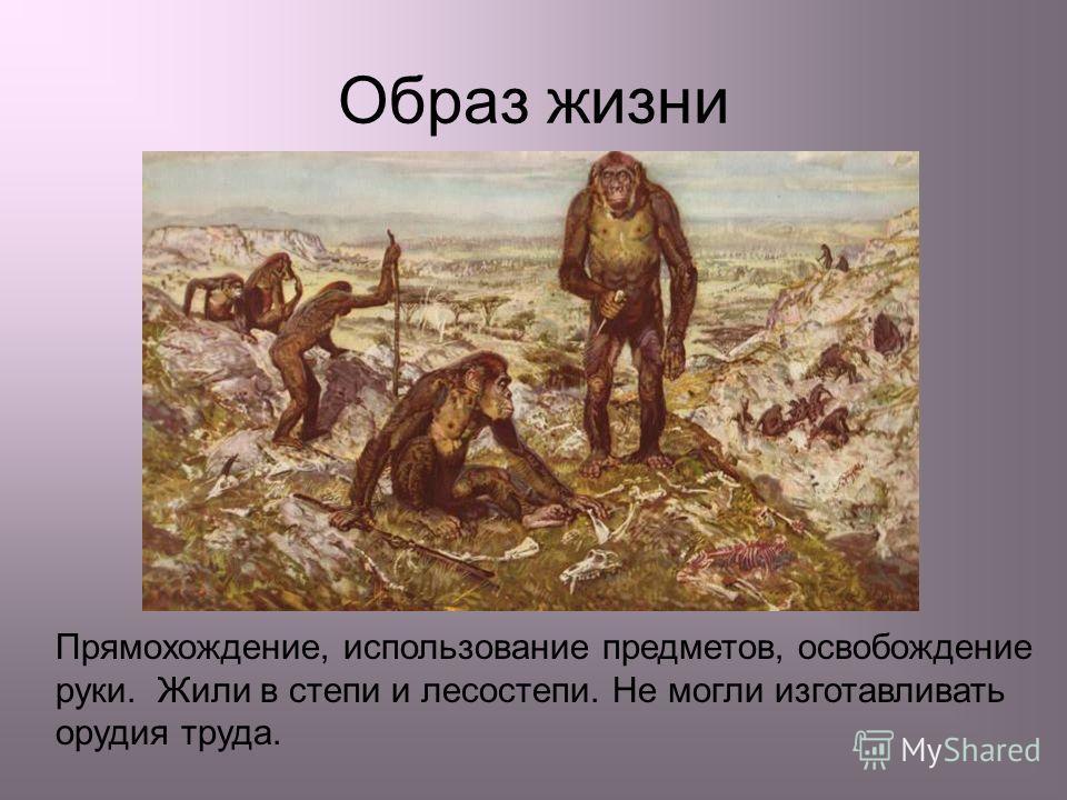 Прямохождение, использование предметов, освобождение руки. Жили в степи и лесостепи. Не могли изготавливать орудия труда. Образ жизни