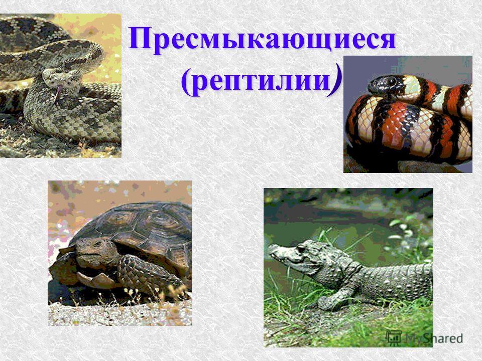 Пресмыкающиеся (рептилии )