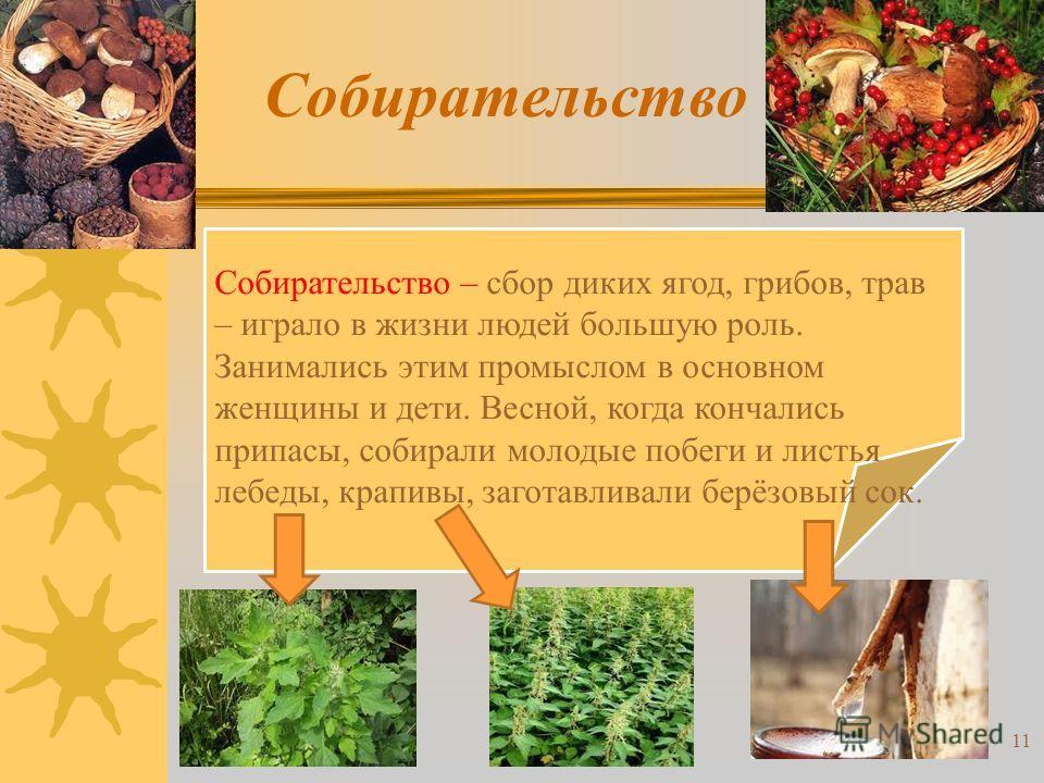 Собирательство Собирательство – сбор диких ягод, грибов, трав – играло в жизни людей большую роль. Занимались этим промыслом в основном женщины и дети. Весной, когда кончались припасы, собирали молодые побеги и листья лебеды, крапивы, заготавливали б