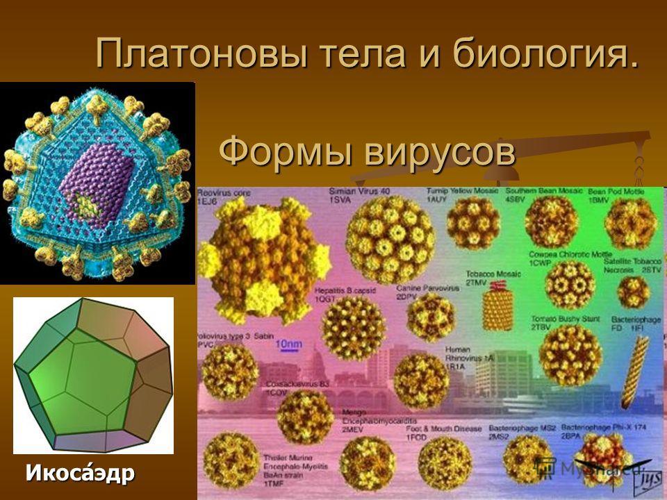 Платоновы тела и биология. Формы вирусов Икоса́эдр