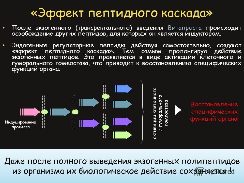 «Эффект пептидного каскада» После экзогенного (трансректального) введения Витапроста происходит освобождение других пептидов, для которых он является индуктором. Эндогенные регуляторные пептиды действуя самостоятельно, создают «эффект пептидного каск