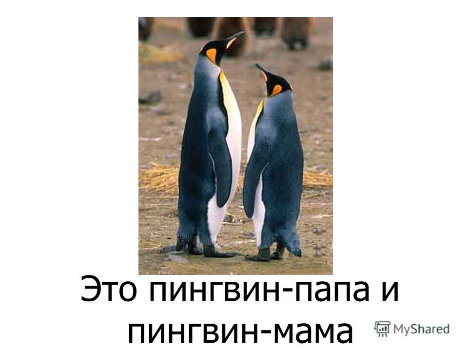 Про пингвинёнка Питера