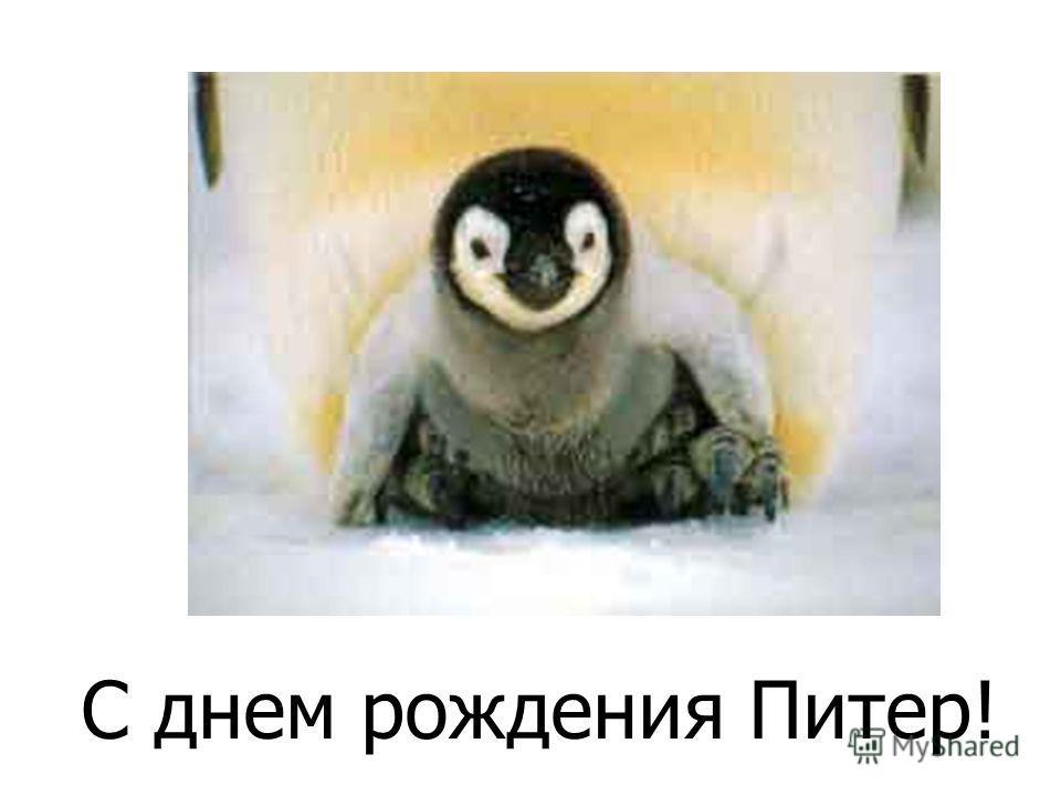 Из яйца вылупился пингвинёнок