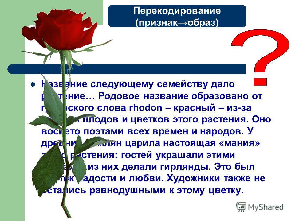 Название следующему семейству дало растение… Родовое название образовано от греческого слова rhodon – красный – из-за окраски плодов и цветков этого растения. Оно воспето поэтами всех времен и народов. У древних римлян царила настоящая «мания» этого