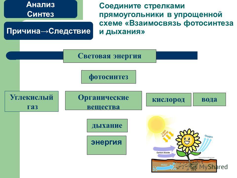 Соедините стрелками прямоугольники в упрощенной схеме «Взаимосвязь фотосинтеза и дыхания» энергия Световая энергия фотосинтез Углекислый газ Органические вещества кислород вода дыхание Анализ Синтез ПричинаСледствие