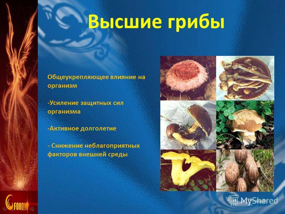 Общеукрепляющее влияние на организм -Усиление защитных сил организма -Активное долголетие - Снижение неблагоприятных факторов внешней среды Высшие грибы