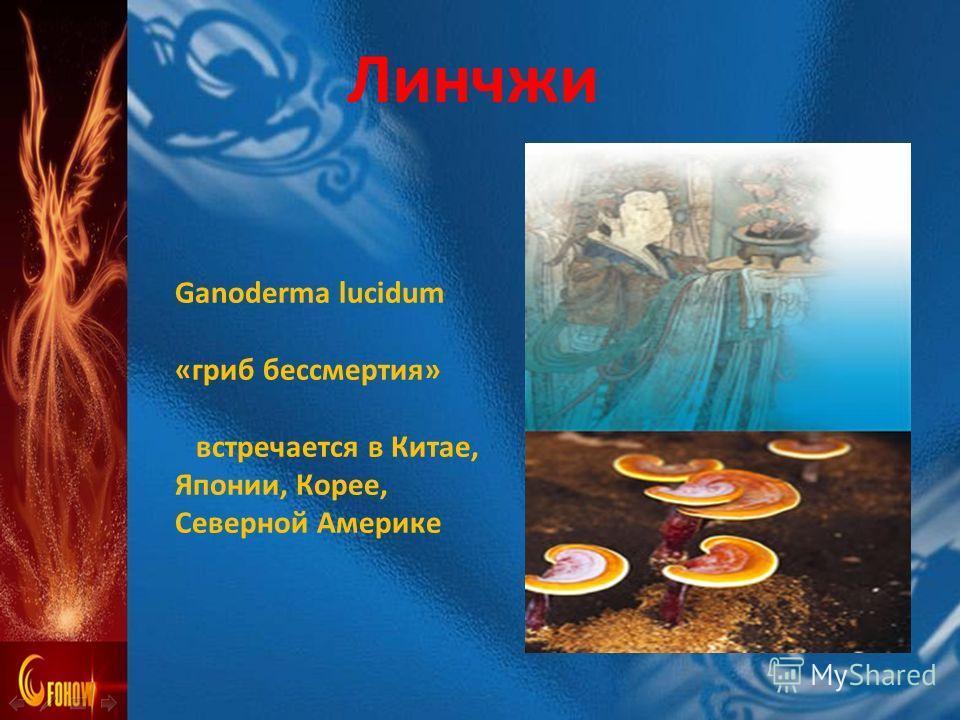 Ganoderma lucidum «гриб бессмертия» встречается в Китае, Японии, Корее, Северной Америке Линчжи