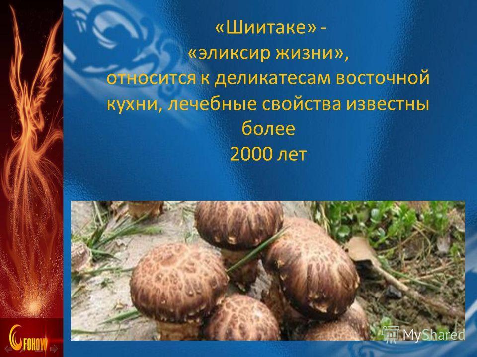 «Шиитаке» - «эликсир жизни», относится к деликатесам восточной кухни, лечебные свойства известны более 2000 лет