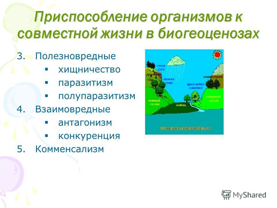 Приспособление организмов к совместной жизни в биогеоценозах 3.Полезновредные хищничество паразитизм полупаразитизм 4.Взаимовредные антагонизм конкуренция 5.Комменсализм