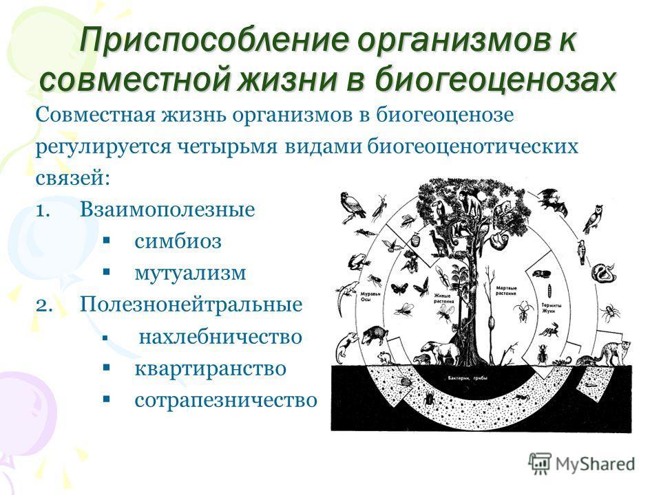 Приспособление организмов к совместной жизни в биогеоценозах Совместная жизнь организмов в биогеоценозе регулируется четырьмя видами биогеоценотических связей: 1.Взаимополезные симбиоз мутуализм 2.Полезнонейтральные нахлебничество квартиранство сотра