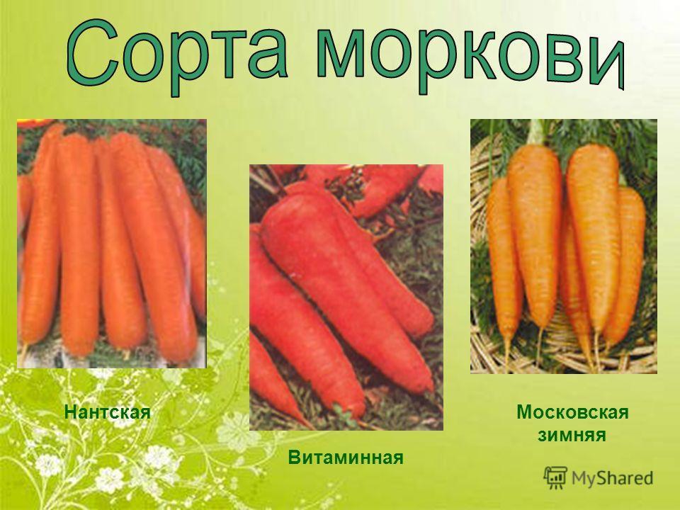 Нантская Витаминная Московская зимняя