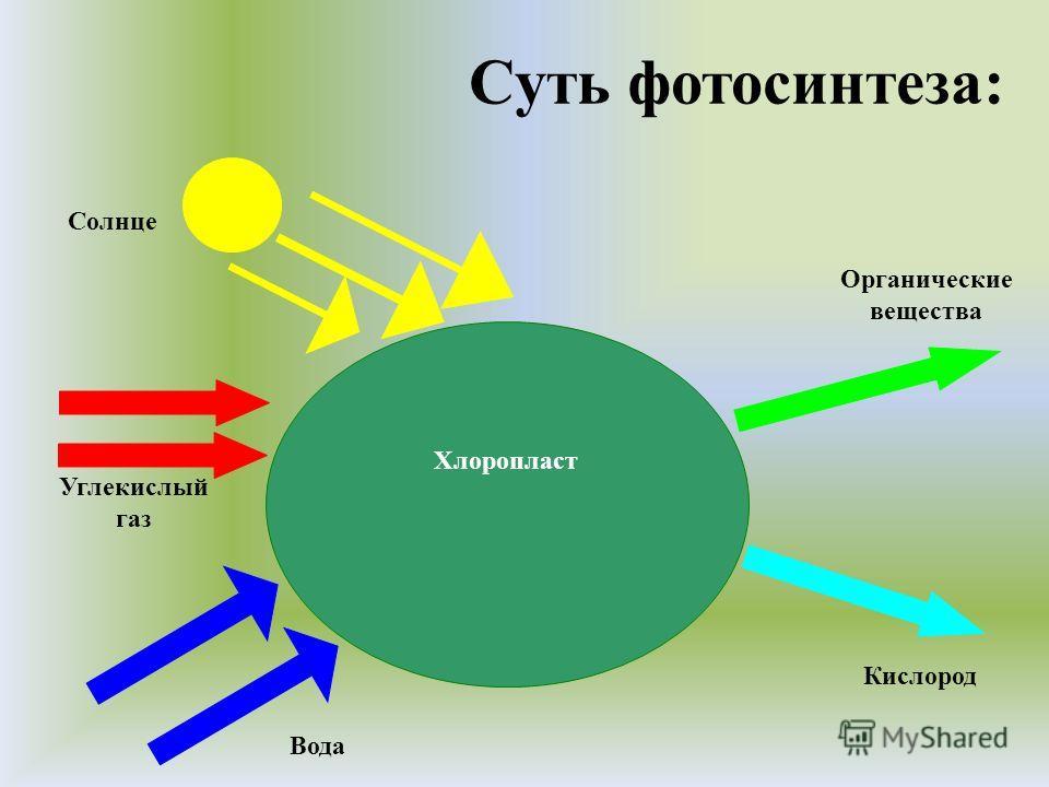 Суть фотосинтеза: Хлоропласт Органические вещества Кислород Вода Углекислый газ Солнце