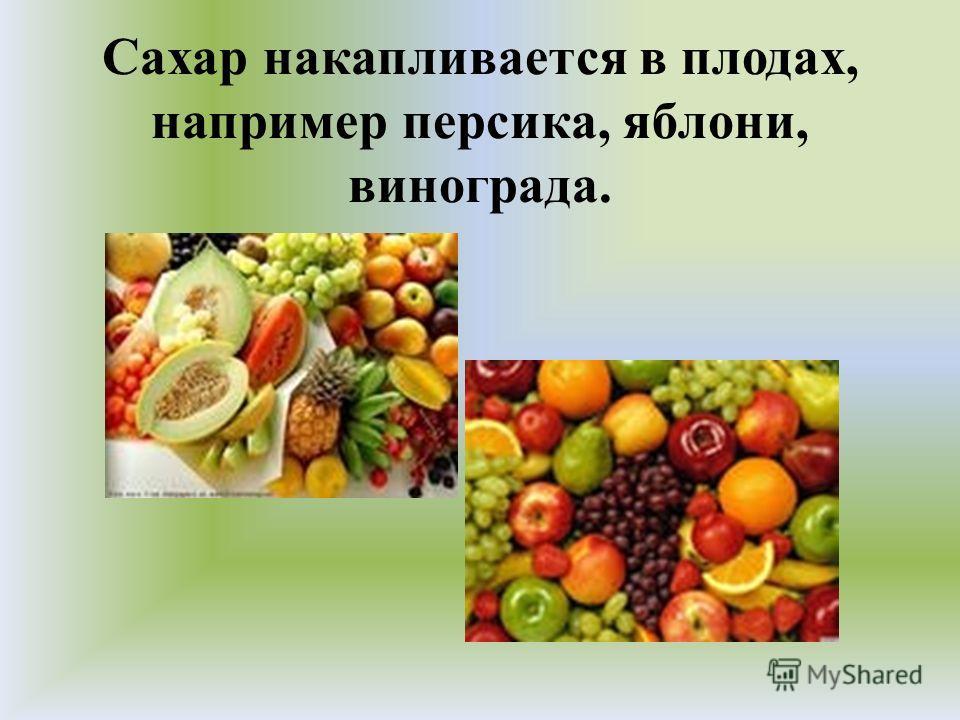 Сахар накапливается в плодах, например персика, яблони, винограда.