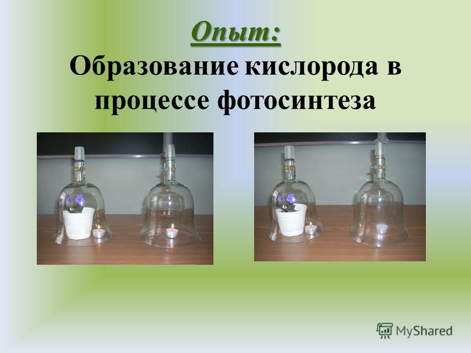 Опыт: Опыт: Образование кислорода в процессе фотосинтеза