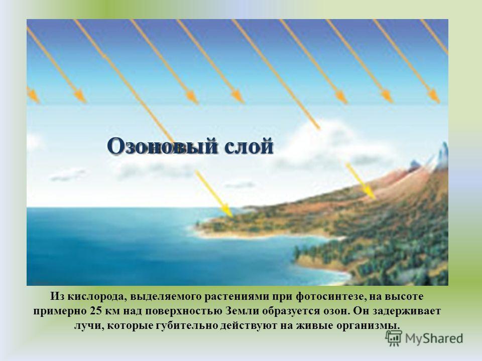 Озоновый слой Из кислорода, выделяемого растениями при фотосинтезе, на высоте примерно 25 км над поверхностью Земли образуется озон. Он задерживает лучи, которые губительно действуют на живые организмы.