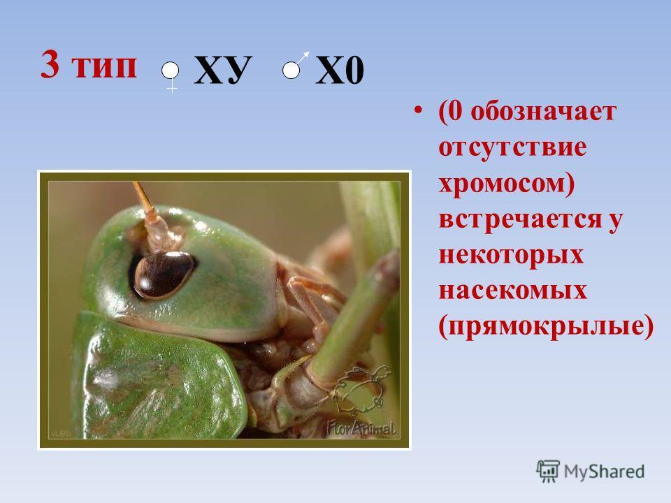 3 тип (0 обозначает отсутствие хромосом) встречается у некоторых насекомых (прямокрылые) ХУ Х0
