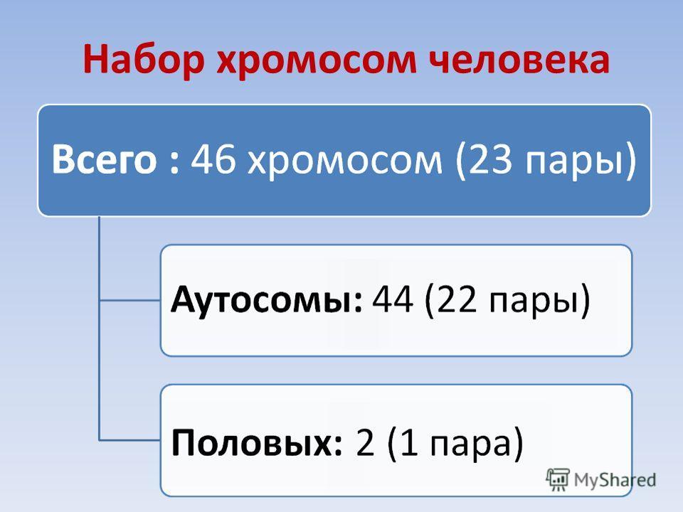Набор хромосом человека