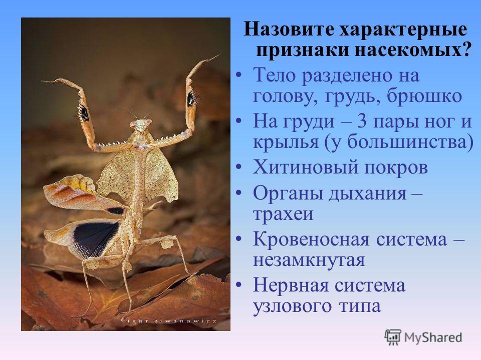 Назовите характерные признаки насекомых? Тело разделено на голову, грудь, брюшко На груди – 3 пары ног и крылья (у большинства) Хитиновый покров Органы дыхания – трахеи Кровеносная система – незамкнутая Нервная система узлового типа