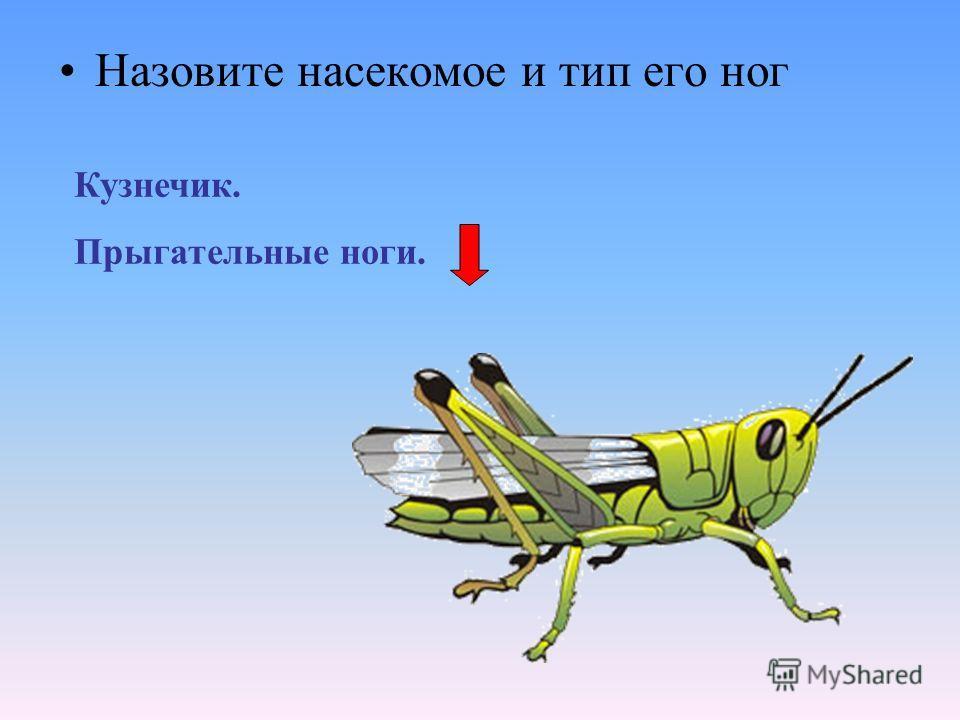 Назовите насекомое и тип его ног Кузнечик. Прыгательные ноги.
