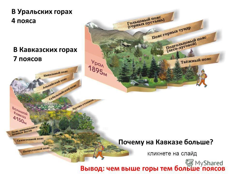 В Уральских горах 4 пояса Вывод: чем выше горы тем больше поясов Почему на Кавказе больше? В Кавказских горах 7 поясов кликнете на слайд