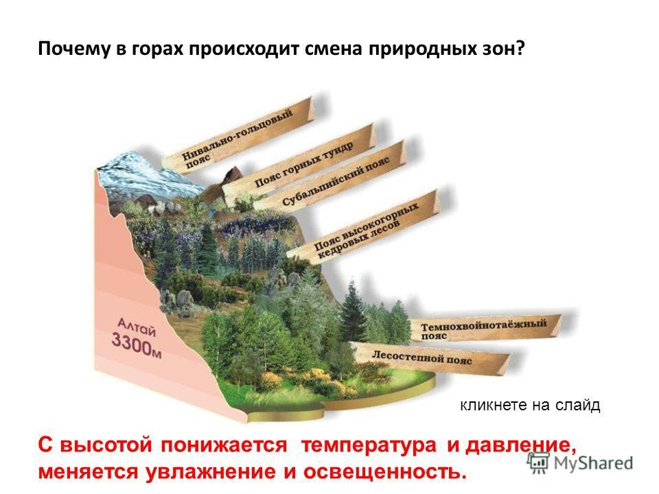 Почему в горах происходит смена природных зон? С высотой понижается температура и давление, меняется увлажнение и освещенность. кликнете на слайд