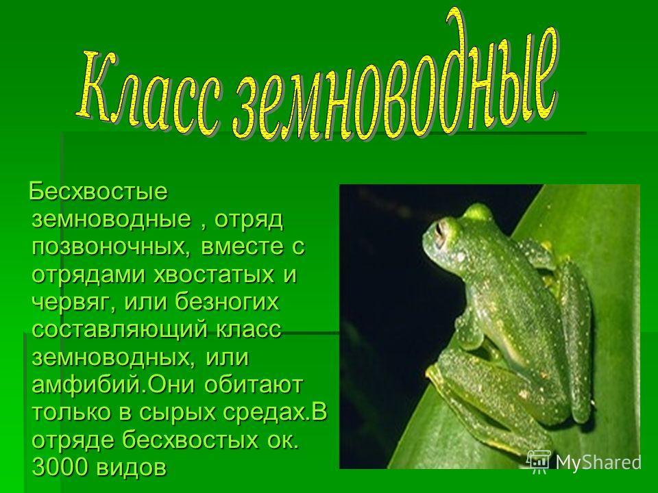 Бесхвостые земноводные, отряд позвоночных, вместе с отрядами хвостатых и червяг, или безногих составляющий класс земноводных, или амфибий.Они обитают только в сырых средах.В отряде бесхвостых ок. 3000 видов