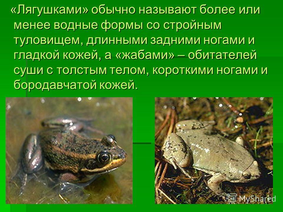 «Лягушками» обычно называют более или менее водные формы со стройным туловищем, длинными задними ногами и гладкой кожей, а «жабами» – обитателей суши с толстым телом, короткими ногами и бородавчатой кожей. «Лягушками» обычно называют более или менее
