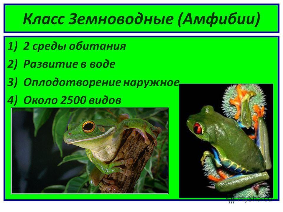 Класс Земноводные (Амфибии) 1)2 среды обитания 2)Развитие в воде 3)Оплодотворение наружное 4)Около 2500 видов