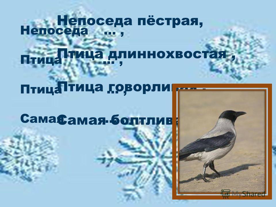 К, прилетели, кормушке, снегири, и, суетливые, красногрудые, синички.