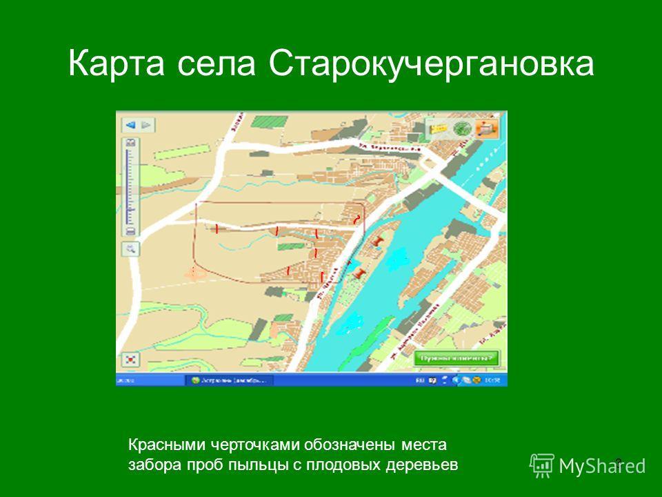 3 Карта села Старокучергановка Красными черточками обозначены места забора проб пыльцы с плодовых деревьев