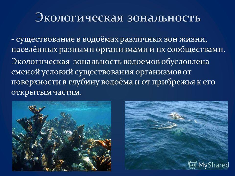 Экологическая зональность - существование в водоёмах различных зон жизни, населённых разными организмами и их сообществами. Экологическая зональность водоемов обусловлена сменой условий существования организмов от поверхности в глубину водоёма и от п