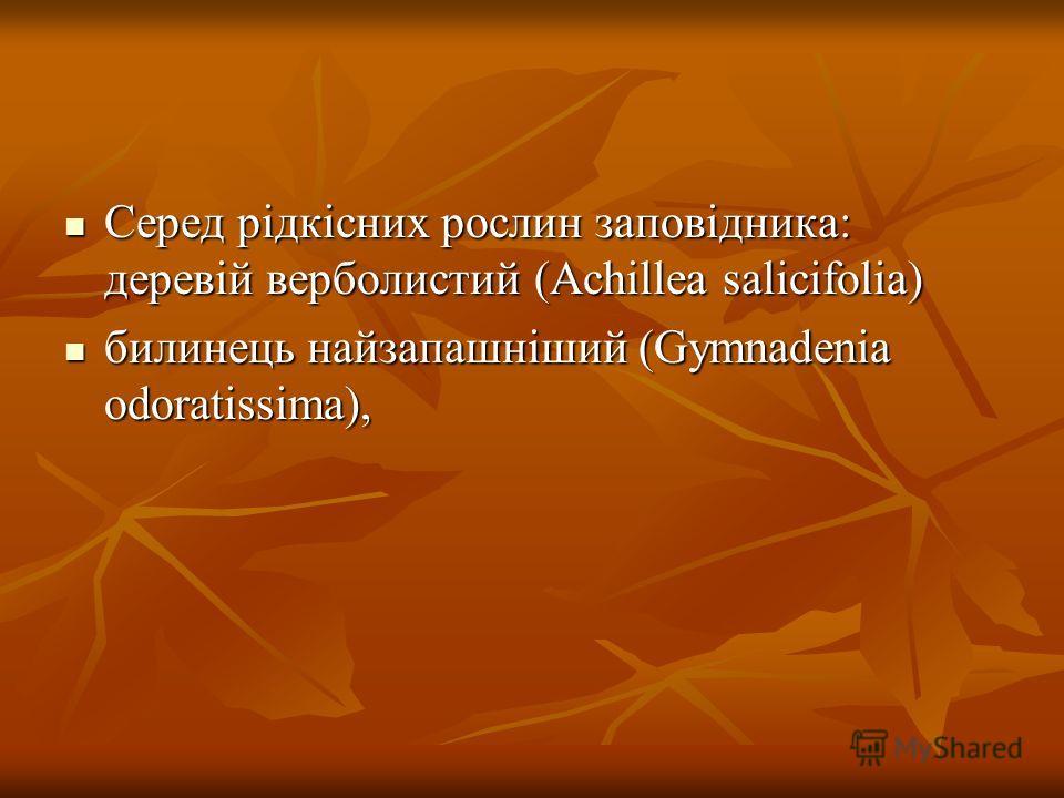 Серед рiдкicних рослин заповідника: деревій верболистий (Achillea salicifolia) Серед рiдкicних рослин заповідника: деревій верболистий (Achillea salicifolia) билинець найзапашніший (Gymnadenia odoratissima), билинець найзапашніший (Gymnadenia odorati