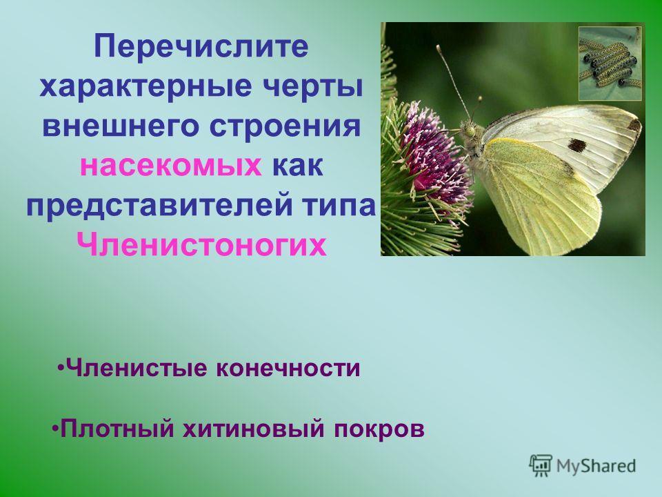 Перечислите характерные черты внешнего строения насекомых как представителей типа Членистоногих Членистые конечности Плотный хитиновый покров