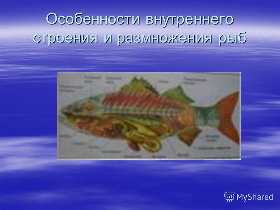 Особенности внутреннего строения и размножения рыб