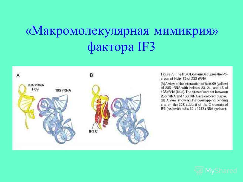 «Макромолекулярная мимикрия» фактора IF3