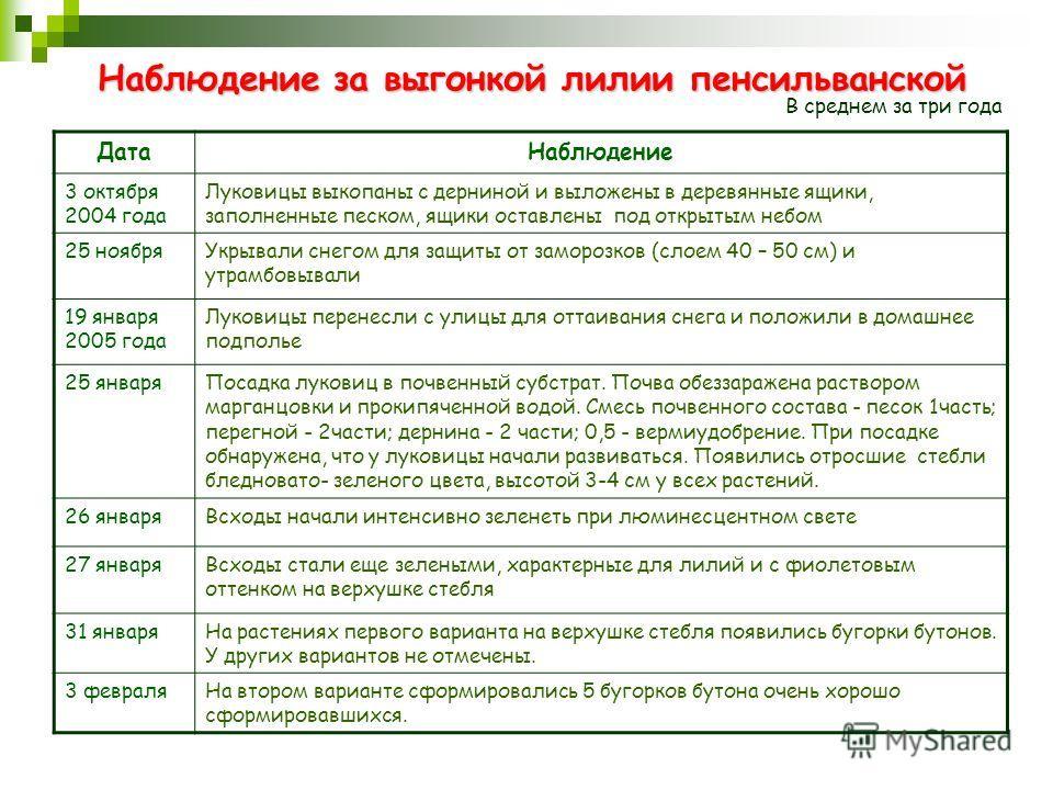 Наблюдение за выгонкой лилии пенсильванской ДатаНаблюдение 3 октября 2004 года Луковицы выкопаны с дерниной и выложены в деревянные ящики, заполненные песком, ящики оставлены под открытым небом 25 ноябряУкрывали снегом для защиты от заморозков (слоем