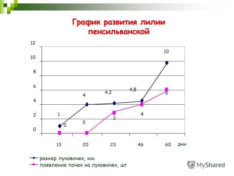 График развития лилии пенсильванской размер луковичек, мм появление почек на луковичек, шт 1 4 4,2 4,5 10 0 0 3 4 6 0 2 4 6 8 12 1320234660 дни