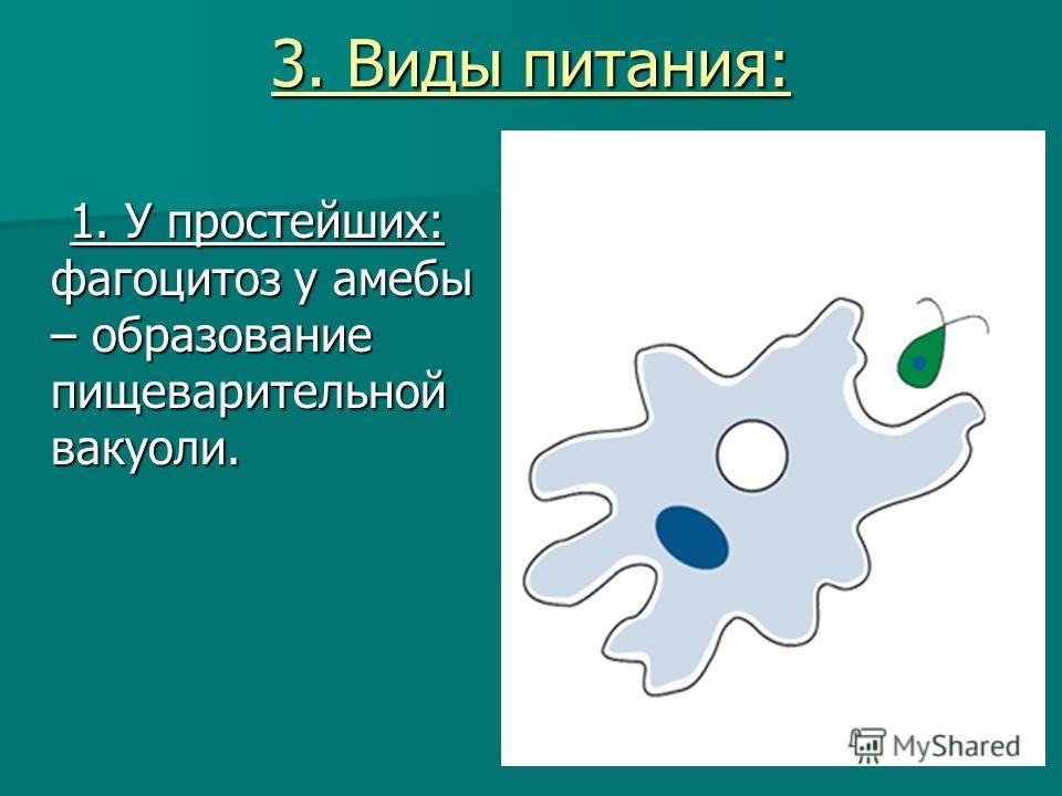 3. Виды питания: 1. У простейших: фагоцитоз у амебы – образование пищеварительной вакуоли. 1. У простейших: фагоцитоз у амебы – образование пищеварительной вакуоли.