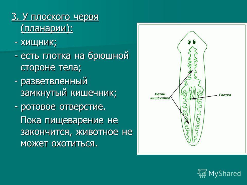 3. У плоского червя (планарии): - хищник; - хищник; - есть глотка на брюшной стороне тела; - есть глотка на брюшной стороне тела; - разветвленный замкнутый кишечник; - разветвленный замкнутый кишечник; - ротовое отверстие. - ротовое отверстие. Пока п