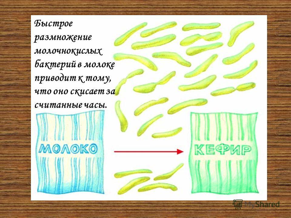 Значение бактерий в природе Почвенные бактерии участвуют в образовании каменного угля, нефти, торфа и т. д. Гнилостные бактерии разлагают органические вещества на неорганические, делая их доступными для растений. Нитрифицирующие и азотофиксирующие ба