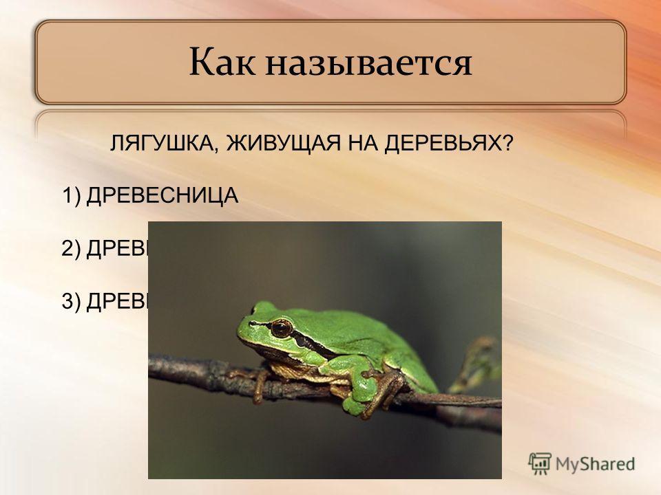 Как называется ЛЯГУШКА, ЖИВУЩАЯ НА ДЕРЕВЬЯХ? 1) ДРЕВЕСНИЦА 2) ДРЕВЕСИНА 3) ДРЕВКО