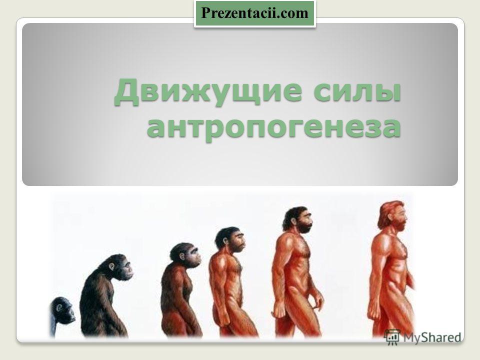 Движущие силы антропогенеза Prezentacii.com