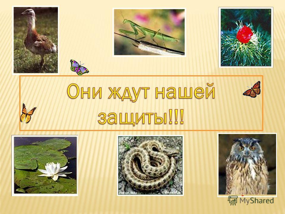 Mantis religiosa. Распространён в юго-восточных районах области. Обитает в разнотравье, где маскируется под цвет окружающей среды. Теплолюбивый дневной хищник, питающийся насекомыми. Везде малочислен, встречаются единичные экземпляры. Редкий, нуждающ